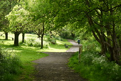 Your journey (Lancashire Lass ...... :) :) :)) Tags: park wood trees light shadow summer dog green june fence john bench countryside track smith lancashire explore walker lane cowparsley longridge dappledlight ribblevalley johnsmithspark