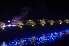 20160305-DSC_2256.jpg (d3_plus) Tags: street sea sky plant flower nature japan spring nikon scenery nightshot cloudy bloom  cherryblossom  sakura lightup nightview 28105mmf3545d nikkor    shizuoka    izu   28105   rapeblossom    28105mm  zoomlense  minamiizu    kawazuzakura    28105mmf3545 d700 281053545  nikond700 shimokamo aiafzoomnikkor28105mmf3545d nightcherryblossom 28105mmf3545af    southcherryblossomandrapeblossomfestival aiafnikkor28105mmf3545d shootingstarsandsakurainnight sakurainnight
