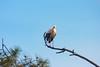 Cicogne blanche (TATIUMZI) Tags: france sony tokina marais oiseaux cigogne sudouest aquitaine gironde leteich sonyalpha tokina30028 sonyalpha700