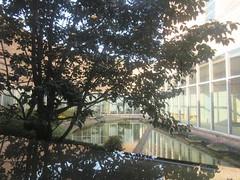 spring reflections (anokarina) Tags: reflection spring korea seoul jeju teahouse teaplantation nofilter osulloc  teamuseum jejuisland jaejudo     hangyeongmyeon instagram canonpowershotelph350hs