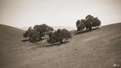 Parched Earth (BackEastPhoto) Tags: california trees santabarbara sepia drought santabarbaracounty happycanyon