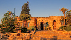 La Posada Milagro - Terlingua, Texas. (dckellyphoto) Tags: morning tree stone fence palms gold golden texas palm terlingua 2016 laposadamilagro