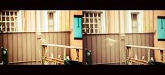 Empathy (Nico Villagra Lopez) Tags: life naturaleza motion bird nature fauna fly jump wings movement emotion flight natura movimiento ali cambio vida pajaros alas change brave salto movimento feeling viaggio decision vita vuelo sentimiento volare emocion sentimento valentia cambiamento coraggio uccelo