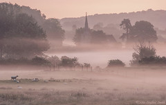 Misty Summer Morning (Ninja Dog - 忍者犬) Tags: uk pink trees summer england mist colour english nature beauty june misty rural fence landscape countryside nikon scenery warm sheep natural farming northamptonshire peaceful fields pastoral tranquil newton eastmidlands hedgerows 2013 d80 geddington scerene newtonfieldcentre