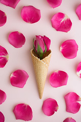 Ice cream cone with rose and petals (tigercop2k3) Tags: pink summer stilllife flower floral rose one pattern cone background fromabove rosebud petal bud wafer overheadview icecreamcone cornet pinkbackground