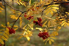 DSC_6008 (Rustam Bikbov) Tags: autumn september 2012    sverdlovskoblast