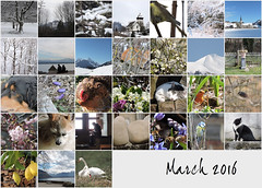 March 2016 mosaic (keepps) Tags: mosaic bighugelabs 365photos