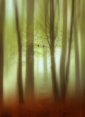 april haze abstract (Dyrk.Wyst) Tags: trees light mist painterly motion blur nature birds composition forest vintage germany landscape deutschland licht buchenwald spring haze mood outdoor fineart natur noone peaceful atmosphere romantic mystical abstraction colourful wuppertal ste landschaft wald bume morgen stimmung frhling beechtree beechtrees frhjahr buchen friedlich farbenfroh textur malerisch creativephotography photoshelter vertorama