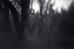 Ghostly trees (that analogue guy) Tags: washington holga panoramic pinhole 6x9 olympics rodinal hohrainforest standdevelopment hallofmosses shanghaigp3 120wpc