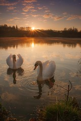 The time of love... (frantiekl) Tags: morning light sky sun reflection love nature water sunshine animals clouds sunrise landscape spring outdoor lagoon swans romantic serene westbohemia