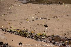 Argentinien_Insekten-86 (fotolulu2012) Tags: tierfoto