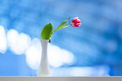 Neulich bei McDonald's (m@yphotos) Tags: blue plant flower color colour nature germany deutschland restaurant europa europe hessen frankfurt natur pflanze objects location mcdonalds tulip vase blau flughafen blume tulpe