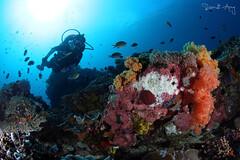 Reef (Randi Ang) Tags: bali canon indonesia photography eos underwater angle wide dive scuba diving fisheye ang 15mm nusa randi 6d nusapenida penida toyapakeh