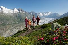Alpenrosen-Aletsch-Gletscher-Aletsch-Arena-Portmann (aletscharena) Tags: schweiz wallis wandern familien aletschgletscher unescowelterbe naturpur familienurlaub moosfluh hohfluh aletscharena familienwillkommen