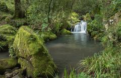 Parque de los Alcornocales (Paqui Izquierdo) Tags: parque naturaleza verde agua natural parquenatural