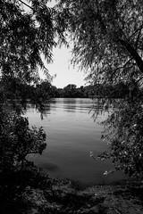 Fort Cobb Lake (yosmama151) Tags: trees blackandwhite bw oklahoma water blackwhite frame 2008 fortcobblake