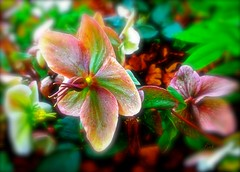 Hypnotic (Pufalump) Tags: red orange green nature leaves yellow petals multicoloured blurred colourful hypnotic