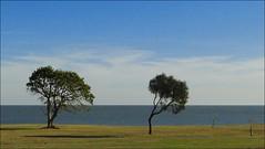 UR - Duas rvores (Maz Parchen) Tags: uruguay mar paisagem cu nuvens montevideo rvores maz paisagemnatural parchen ramblacostaera
