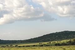 light bands on the hills of the northern serengeti (charlesgyoung) Tags: africa tanzania nikon safari serengetinationalpark charlesyoung d810 kleinscamp nikonfx nomadtanzania karineaignerphotographyexpedition