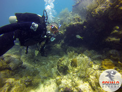 Scuba Dive in Key Largo-April 2016-45 (Squalo Divers) Tags: usa divers key florida scuba diving padi ssi largo squalo