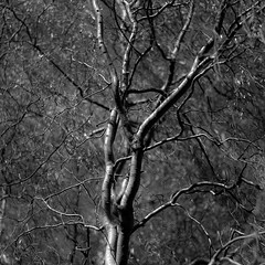 Up Through Trees 022 (noahbw) Tags: autumn trees light shadow blackandwhite bw abstract blur monochrome leaves forest square landscape blackwhite woods nikon dof natural branches depthoffield treetrunk d5000 noahbw sedgemeadowforestpreserve