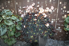 IMG_2460 (Mercar) Tags: canada garden botanical montreal jardin greenhouse botanic botaanikaaed qubeck