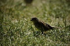 _DSC0403 (chris30300) Tags: france heron de pont parc oiseau camargue gau saintesmariesdelamer flamant provencealpesctedazur ornithologique