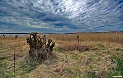 Landschaftsfotografie (garzer06) Tags: deutschland himmel wolken insel gras grün blau rügen vorpommern naturephotography mecklenburgvorpommern weis landscapephotography naturephoto naturfoto inselrügen jasmunderbodden wolkenhimmel landschaftsbild landschaftsfotografie kleinerjasmunderbodden