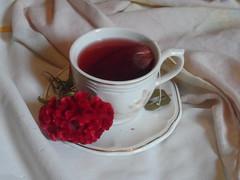 91/366 Delicacy (JessicaBelotto) Tags: flowers cup frutas foto tea interior flor twinings mug fotografia cama caneca xcara ch vermelhas