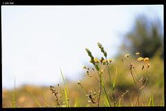 IMG_5085 (anto-logic) Tags: flowers blue light italy plants sun white hot verde green primavera nature beautiful grass yellow canon fence wonderful eos freedom countryside spring nice flora focus pretty italia dof bokeh pov gorgeous meadow free natura clear campagna erba pointofview giallo tuscany april lovely fiori aprile fabulous toscana sole acqua piante chiara rosso azzurro prato bianco luce libero libert bello caldo profonditdicampo puntodivista