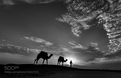Dune Walker (southjerseseyhvac) Tags: from travel light blackandwhite india white black art clouds canon lens landscape is photo sand sam mark dunes diary iii fineart fine images 5d usm incredible camels mentor sanddunes jaisalmer rajasthan travelogue chasers jassi traveldiary incredibleindia imagesfromindia oberai lightchasers canonphotomentor 1635f4l