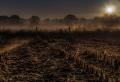 Good Morning, Sunshine! (Klaus Ficker) Tags: sunshine fog sunrise canon germany nebel feld goodmorning eos5dmarkii kentuckyphotography klausficker