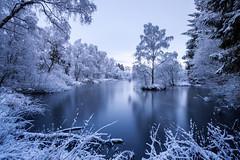Window on a winter wonderland (Stuart Stevenson) Tags: uk blue trees winter snow cold ice water photography scotland frozen frost snowy january lochan coolblue walkingthedog 2016 closetohome clydevalley lcoh stuartstevenson wwwzerogravitymeuk appicoftheweek