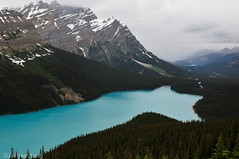 Peyto Lake. Banff National Park, Alberta, Canada (Jeffrey Jang Photography) Tags: ca canada jeff nature landscape nikon scenic alberta jeffrey jang banffnationalpark naturephotography peytolake d300 wildplaces jeffreyjangphotography l058262014