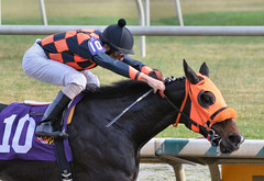 "2015-12-13 (68) r5 Roimes Chirinos on #10 Michelle (JLeeFleenor) Tags: photos photography md marylandracing marylandhorseracing laurelpark jockey جُوكِي ""赛马骑师"" jinete ""競馬騎手"" dżokej jocheu คนขี่ม้าแข่ง jóquei žokej kilparatsastaja rennreiter fantino ""경마 기수"" жокей jokey người horses thoroughbreds equine equestrian cheval cavalo cavallo cavall caballo pferd paard perd hevonen hest hestur cal kon konj beygir capall ceffyl cuddy yarraman faras alogo soos kuda uma pfeerd koin حصان кон 马 häst άλογο סוס घोड़ा 馬 koń лошадь bay maryland"