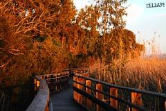L' atmosfera del tramonto... (lella 92) Tags: sardegna sun nature colors landscape landscapes pond tramonto sardinia natural sunsets special passion tramonti sole colori sassari sets catwalk platamona stagno sardigna stagnodiplatamona naturasarda paesaggisardi sardinelcuore
