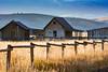 Chambers Homestead, Grand Teton (MarkWarnes) Tags: autumn fall barn farm wheat homestead grandteton grandtetonnationalpark mormonrow antelopeflats cottonwoodtrees moultonbarn mormonbarn moranjunction chambershomestead