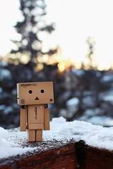 Danbo at Sunset | 18/366 (Cassidy Jade) Tags: sunset bokeh danbo 366 366project day18366 cy365 366the2016edition 3662016 18jan16