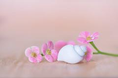 Pretty in Pink (Elizabeth_211) Tags: pink flowers stilllife macro closeup tennessee shell drop jacksontn westtn sherielizabeth