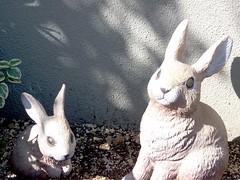 #6932 rabbits () (Nemo's great uncle) Tags: rabbit hare  funabashi    setagayaku tky
