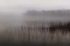 al silenzio del mattino (pamo67) Tags: trees mist lake water alberi reflections lago outdoors atmosphere wires canes nebbia acqua riflessi atmosfera fili canne lacustre lacustrine pamo67 pasqualemozzillo atsilenceofthemorning