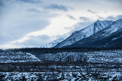 Ridges and Ranges (Quincey Deters) Tags: morning blue winter mountain snow canada tree nature horizontal forest landscape outdoor january alberta northamerica rockymountains allrightsreserved jaspernationalpark d300 2016 canadianrockymountains burnarea colourimage 18mm200mm quinceydeters synclineridge