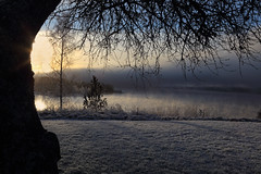 A cold December morning (gallserud) Tags: winter mist frost sweden