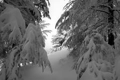 Scatman (bw) (jrseikaly) Tags: winter bw lebanon white snow black tree nature monochrome forest landscape jack photography high dynamic outdoor background cedar range arz hdr bnw cedars seikaly jrseikaly