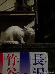 (Shiori Hosomi) Tags: cats japan night tokyo nocturnal february  mammalia felis 2016  carnivora felidae    noctuary    noctivagant  23