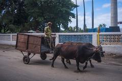 Antiguo Ingenio Soledad (hoy Pepito Tey) en Cienfuegos (lezumbalaberenjena) Tags: cuba central soledad cienfuegos zafra azucar yolk sugarmill buey tey pepito ingenio bueyes azucarero molienda