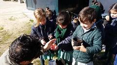 huerto-niños-colegio-madrid (23)