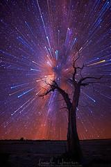 bridgewater+tree+mwzoom.jpg (erindarby62) Tags: longexposure stars nikon nightsky gitzo startrails d800 milkyway nightlandscape startrail circumpolar 1424 d800e nikond800e lincolnharrison