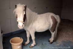 Pony (savioarchi) Tags: nature animal friend natura pony animali hourse