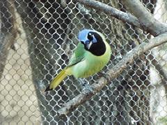 DSCF0380 (rgmccarty) Tags: animal zoo ftworthzoo beautifulbird